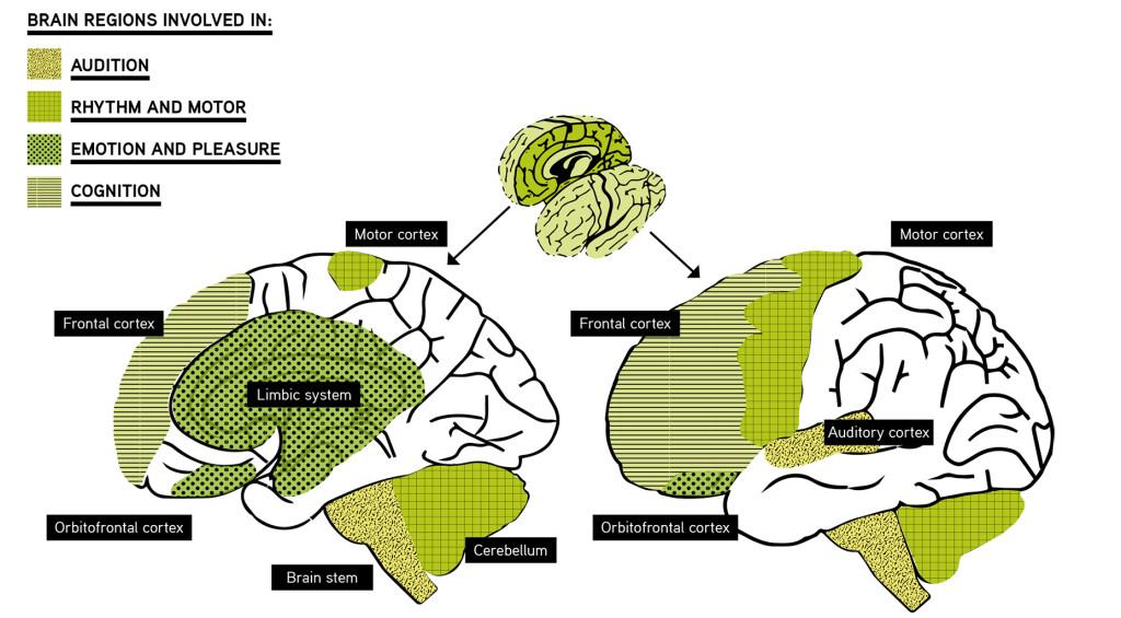 Brain neurochemicals and sex hormones